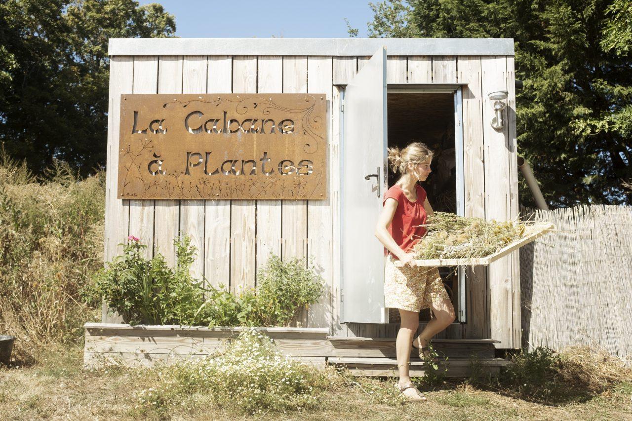 le séchoir de la cabane à plantes